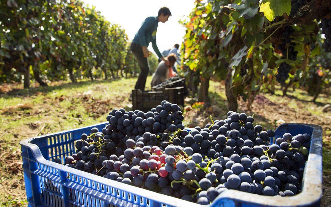 Avanza el programa cooperativo-mutual para financiar 5000 productores vitivinícolas